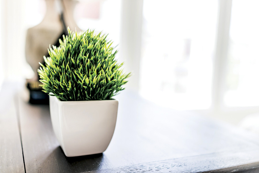 Tranquil green plant