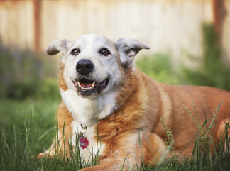 Tips to keep your  senior pet healthy