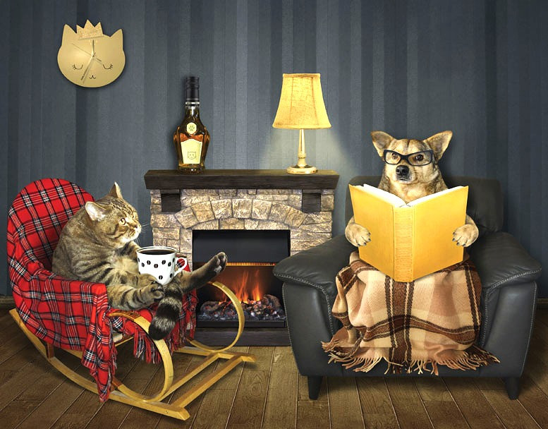 aging cat and dog relaxing in chairs by a fireplace