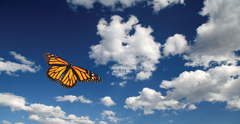monarch butterfly soaring into the clouds of a blue sky