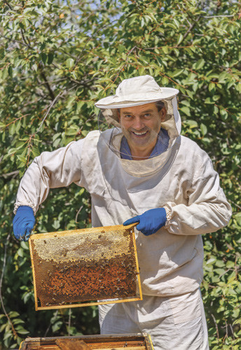 Beekeeper opening a hive to see honey