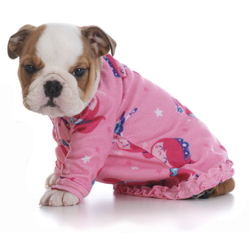 Tiny puppy dressed in pink pajamas