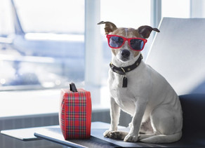 Prep the Family Pet for aSummer Road Trip
