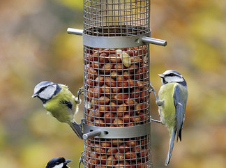 Make bird safety a priority in your garden