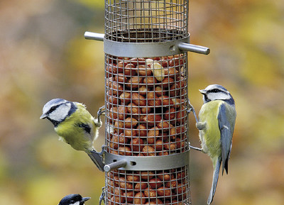 Make bird safety a priority in your garden