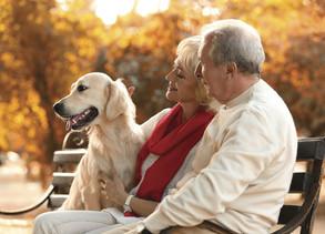 Living With a Senior Dog
