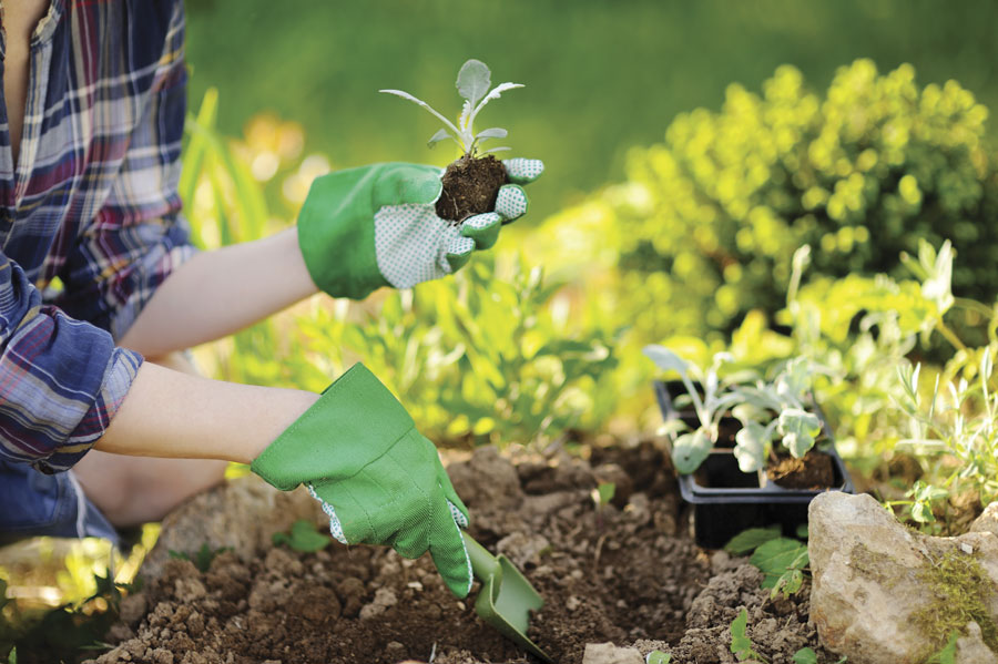 Digging in the garden dirt