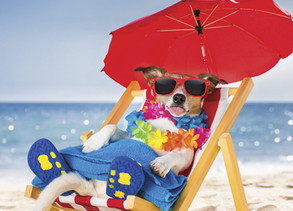 Keep your pets safe in hot weather