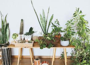 Healthy Benefits of Houseplants