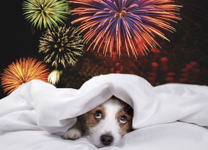 Thunder and Fireworks: How to Keep Your Dog Safe and Calm