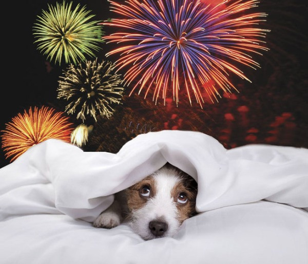 Dog hides from fireworks