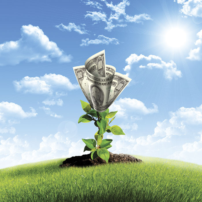 money planted in ground and growing