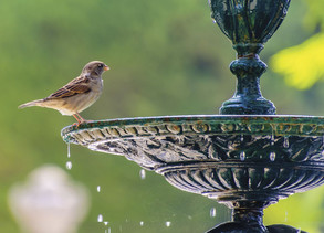 Birds are Essential for Your Yard