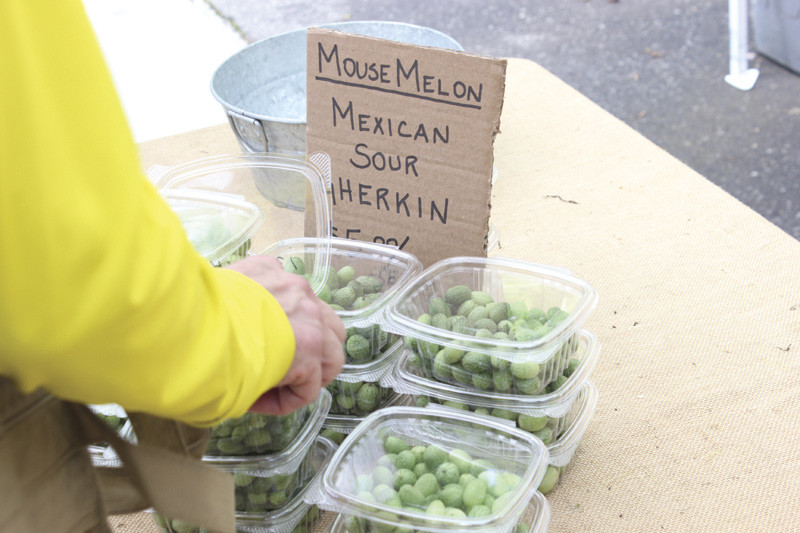 Free samples of sour melon