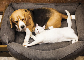Dog Breeds That Get Along Well with Cats