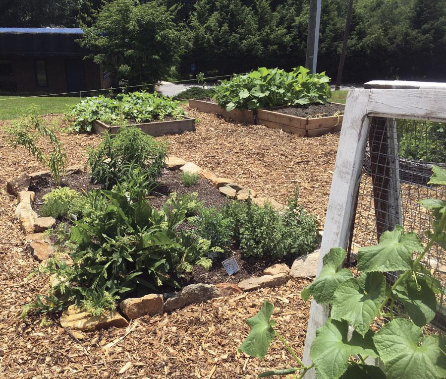 Growing vegetables in the garden