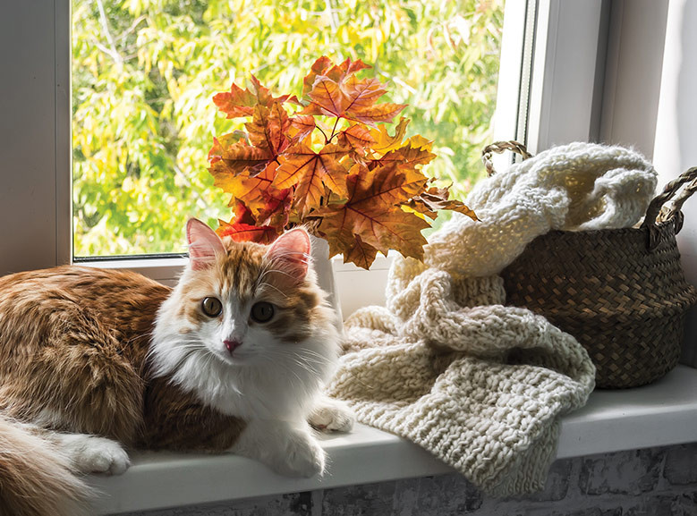 Orange cat fall leaves and a warm sweater theme for Fall