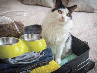 Make the Best of Traveling With Your Pets