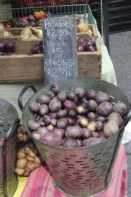 Close up of purple skinned potatoes in a bucket