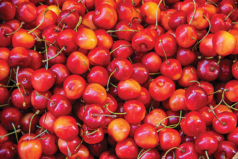 a large number of cherries sweet snack vitamins and recipes