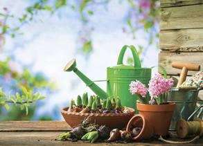Easy Plants for Beginner Gardeners