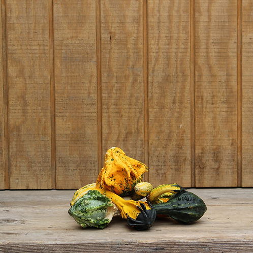 Small Winged Gourds - 2 Count
