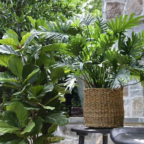 Faux Split Philodendron 3'