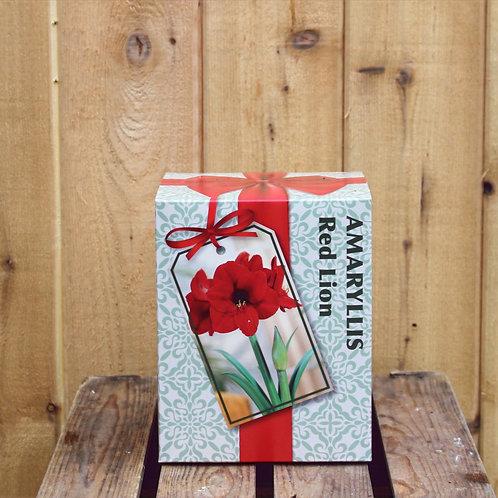 Amaryllis Bulb Kit Red