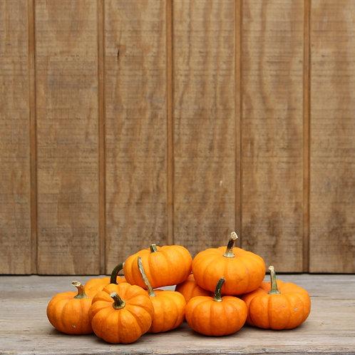 Jack-B-Little Pumpkins - 2 Count