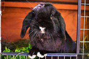 Cute Bunny