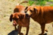 Doggy Daycare Friends