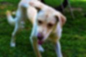 Dog Chewing Stick