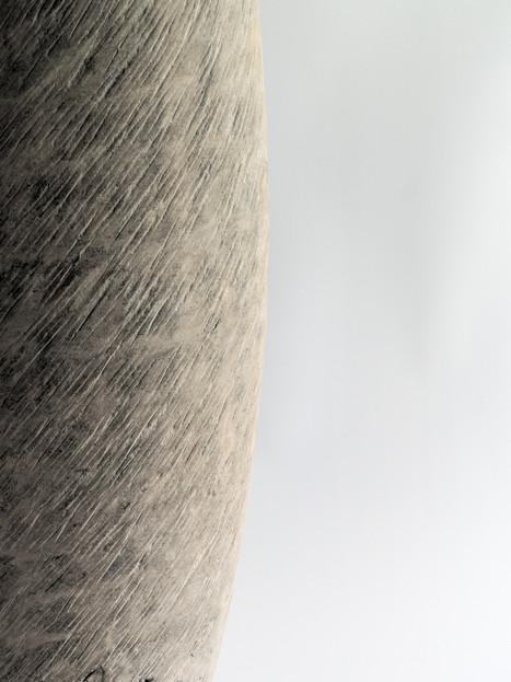 Diospyros kaki