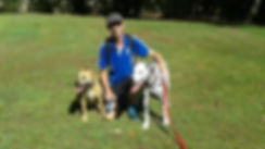 Our dog walking service is popular, Sasha and Gus enjoy their hour long walks with Ultimate Pet Care.