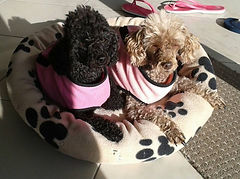 Best photos of our pet care, dog walking and pet sitting services on the Sunshine Coast