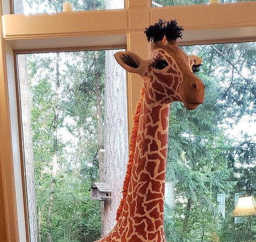 Masai Baby Giraffe