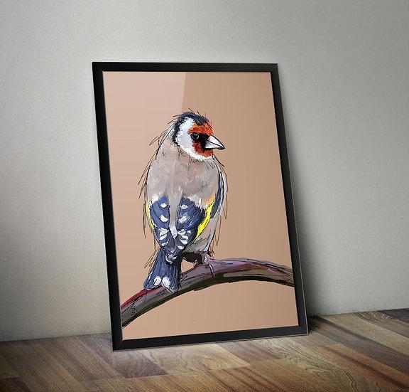 Finch - Bird giclée prints.