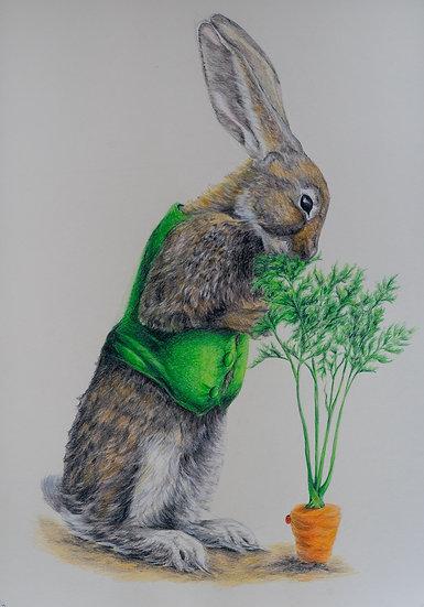 The Carrot Connoisseur