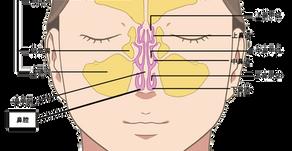 鼻と副鼻腔の構造と機能