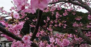 カレンダーより早い春の訪れ