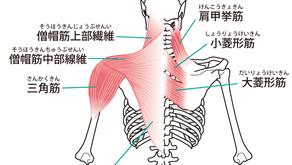 ⑦頭痛の圧痛点と体操(西洋医学からみた頭痛Q&A:その7)
