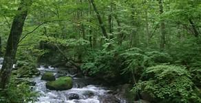 奥入瀬渓流へ