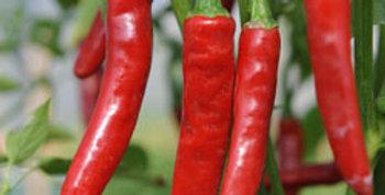 Peperoni Cayenne