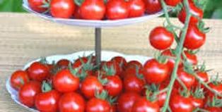Tomate Favorita