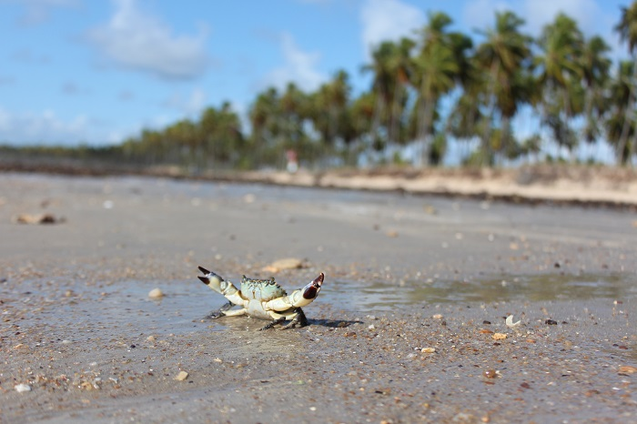 Vida Praia do Paiva