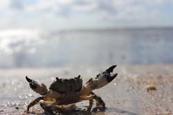 Praia do Paiva Foto