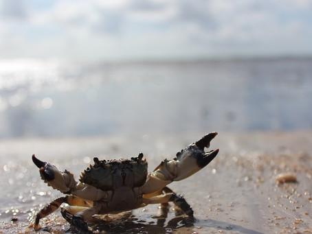 Fotos Praia do Paiva