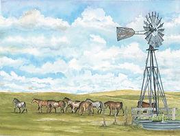 CIN-pasture-horses.jpg
