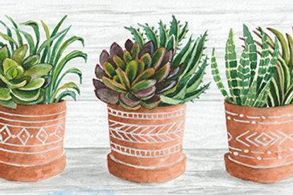 Clay Pots of Succulents I