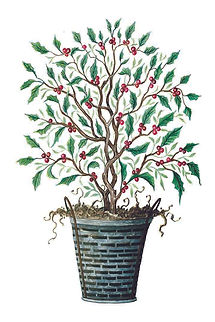 CIN--tree-holly.jpg